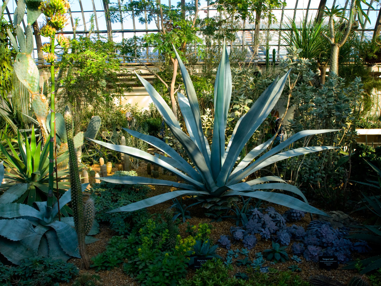 Garfield Park Conservatory in Chicago