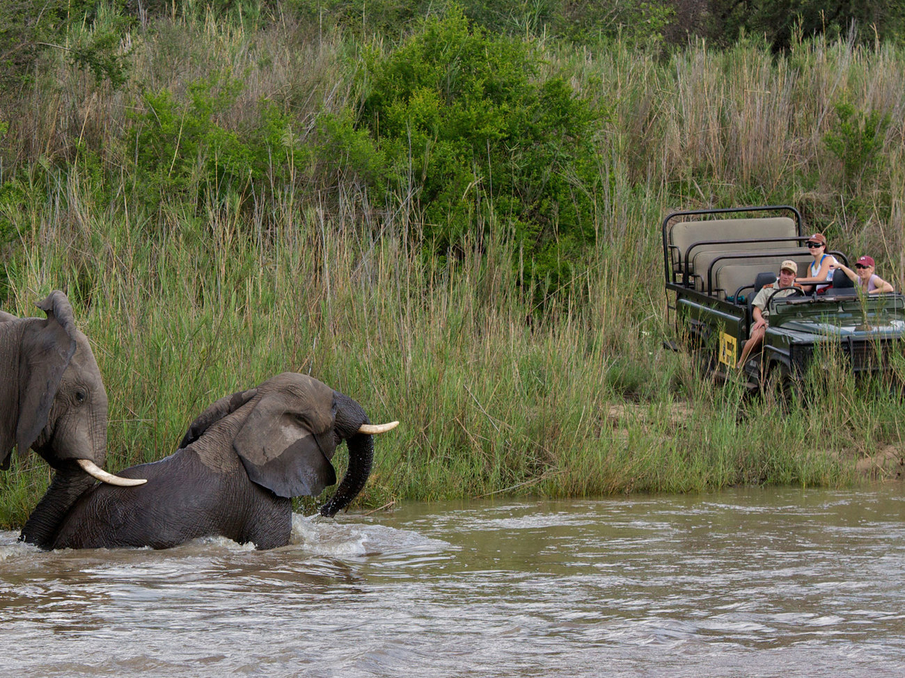 MalaMala Game Reserve safari