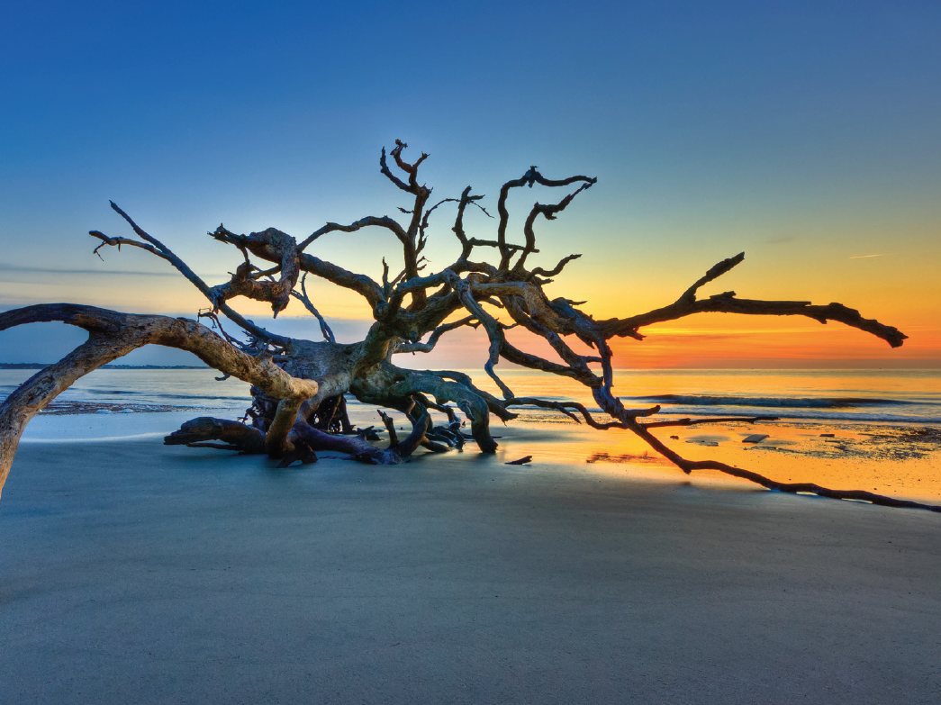 CHECK-IN-GOLDEN-ISLES