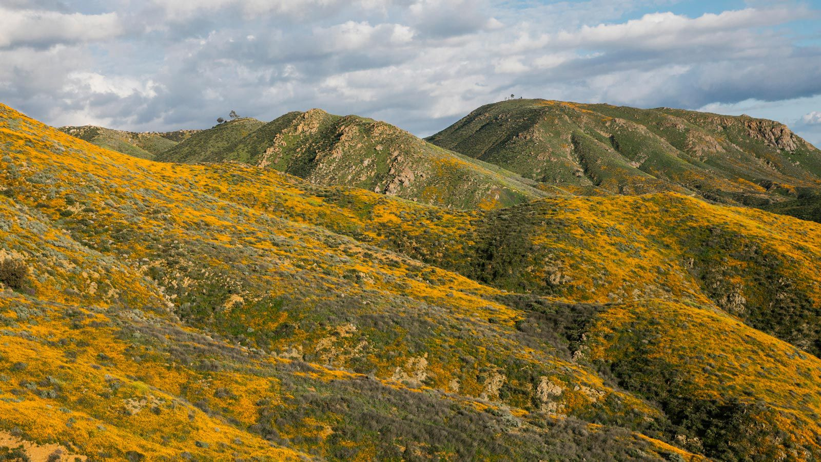 Spring 2019 Walker Canyon California Wildflower Superbloom