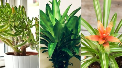 House Plants Air Quality