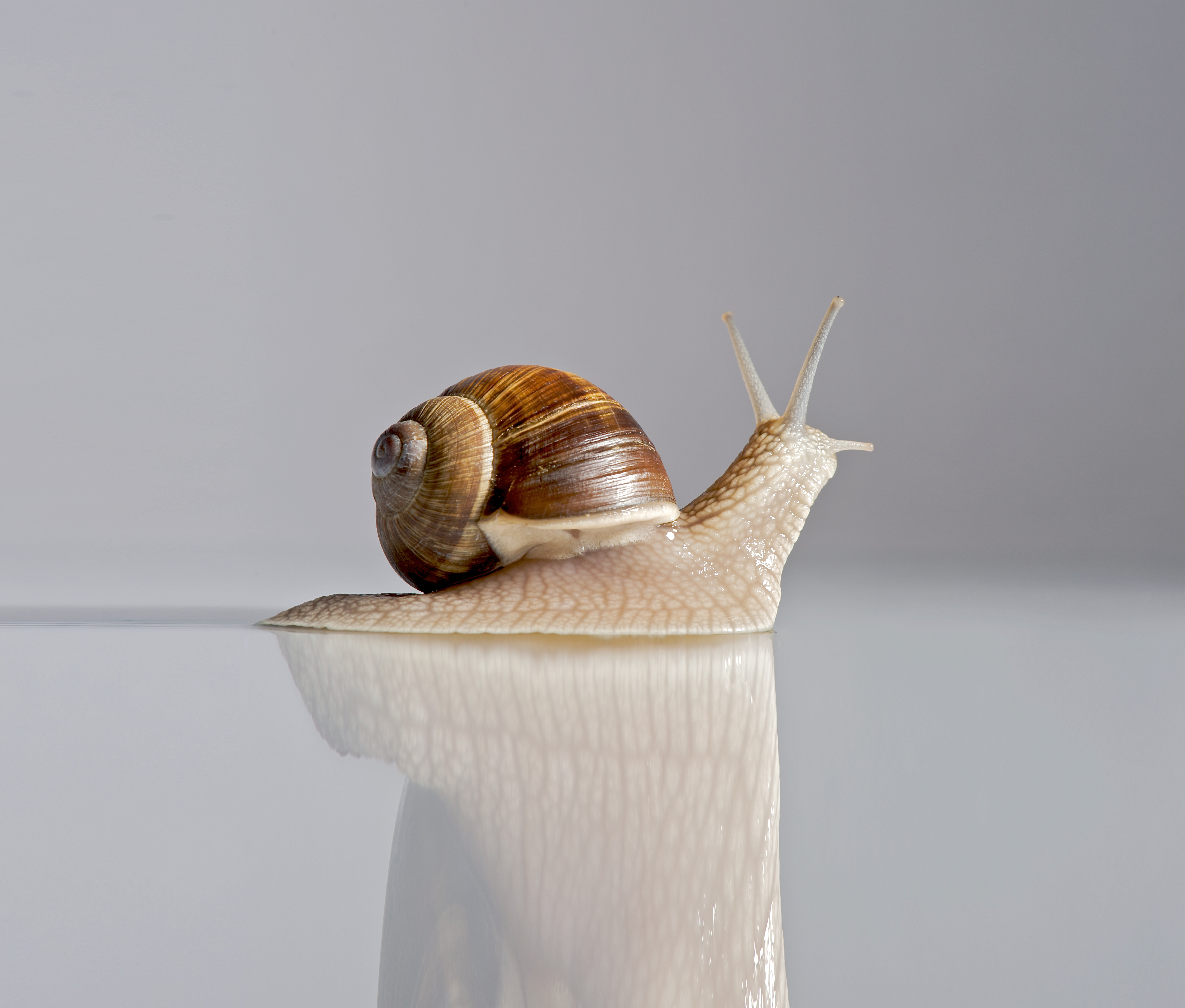 best-snail-skincare-products