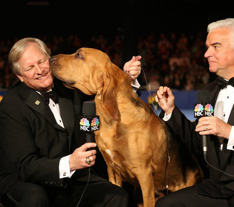 THE NATIONAL DOG SHOW 2015 embed 2