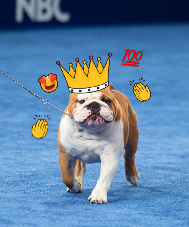 National Dog Show Winner 2019