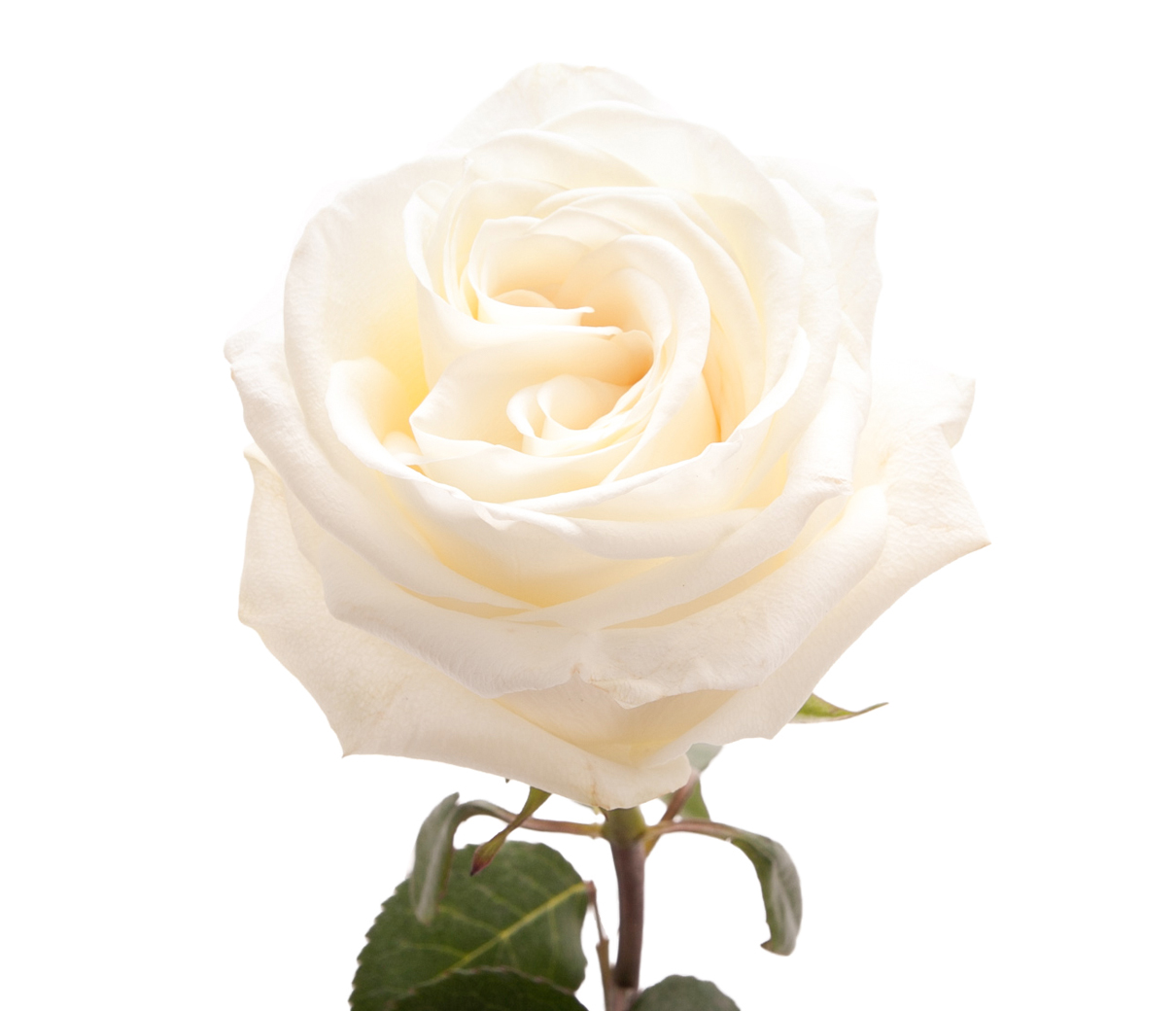 White: purity, new beginnings, remembrance