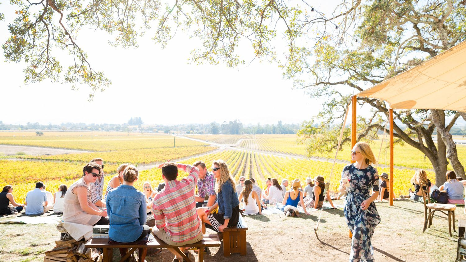 Sonoma Scribe Winery - Lead