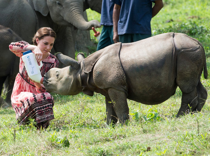 Up close with a baby rhino