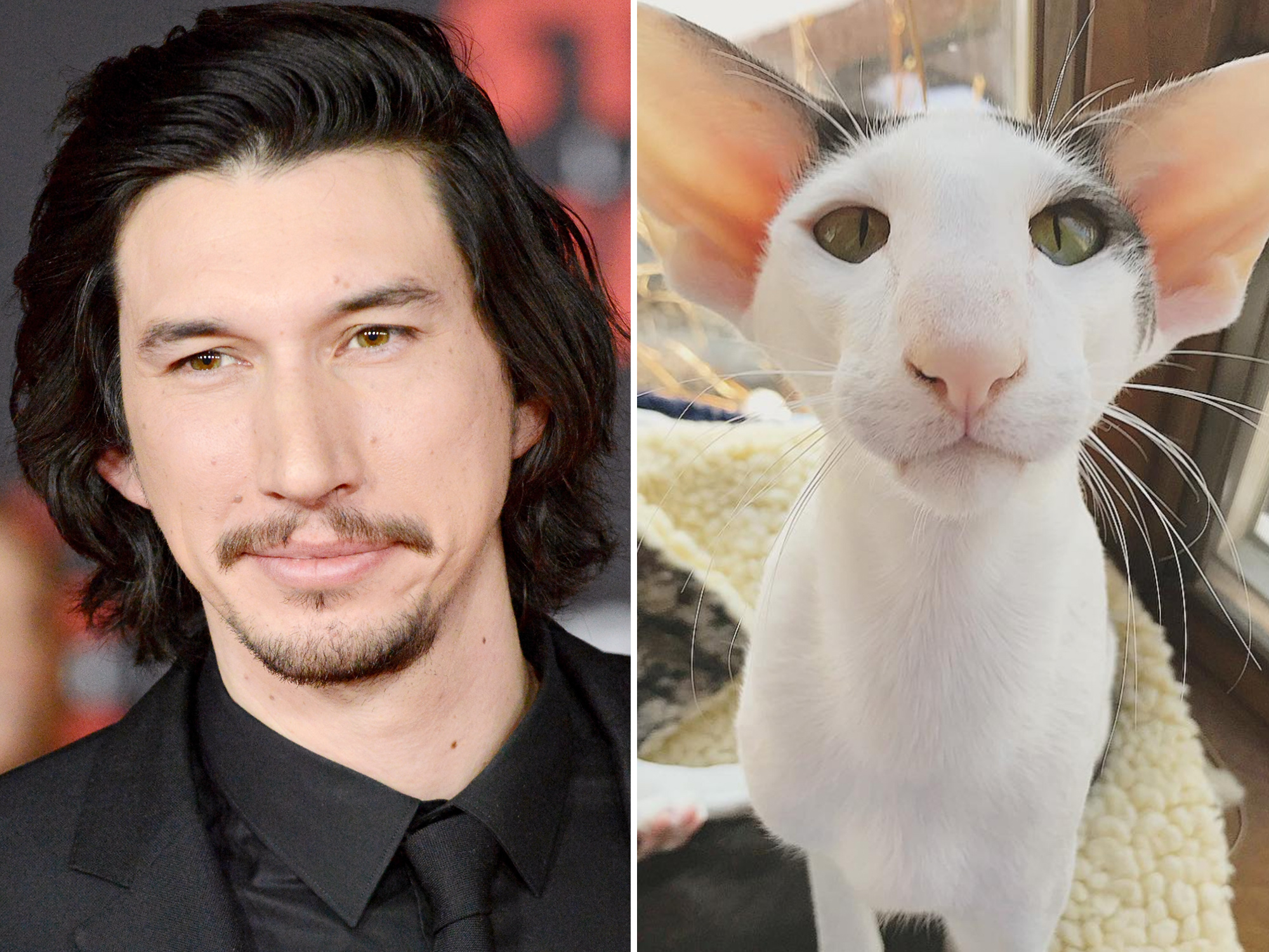 Adam Driver Cat Twin