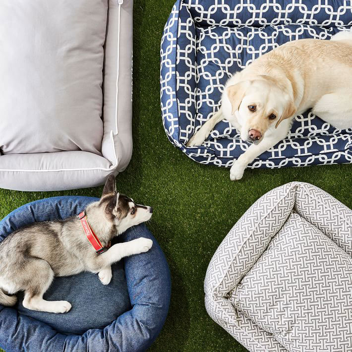 Pet Gift Guide - Lead
