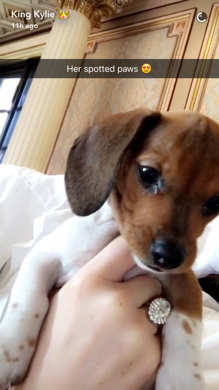 Kylie Jenner Puppy - Embed 3