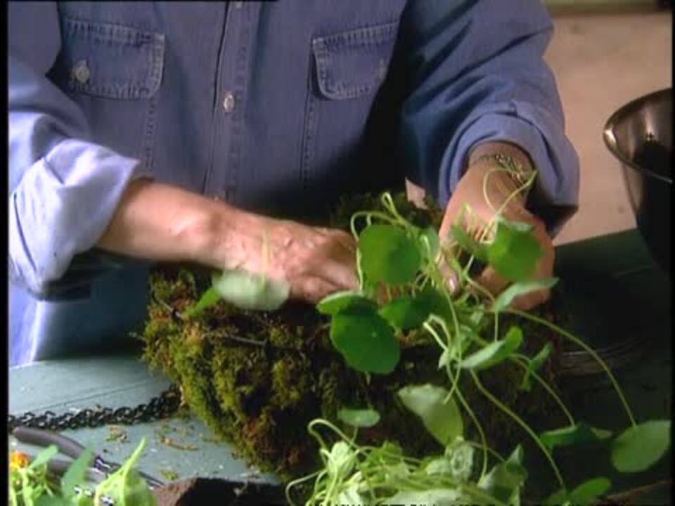 How to Make Hanging Plant Baskets Lined with Moss