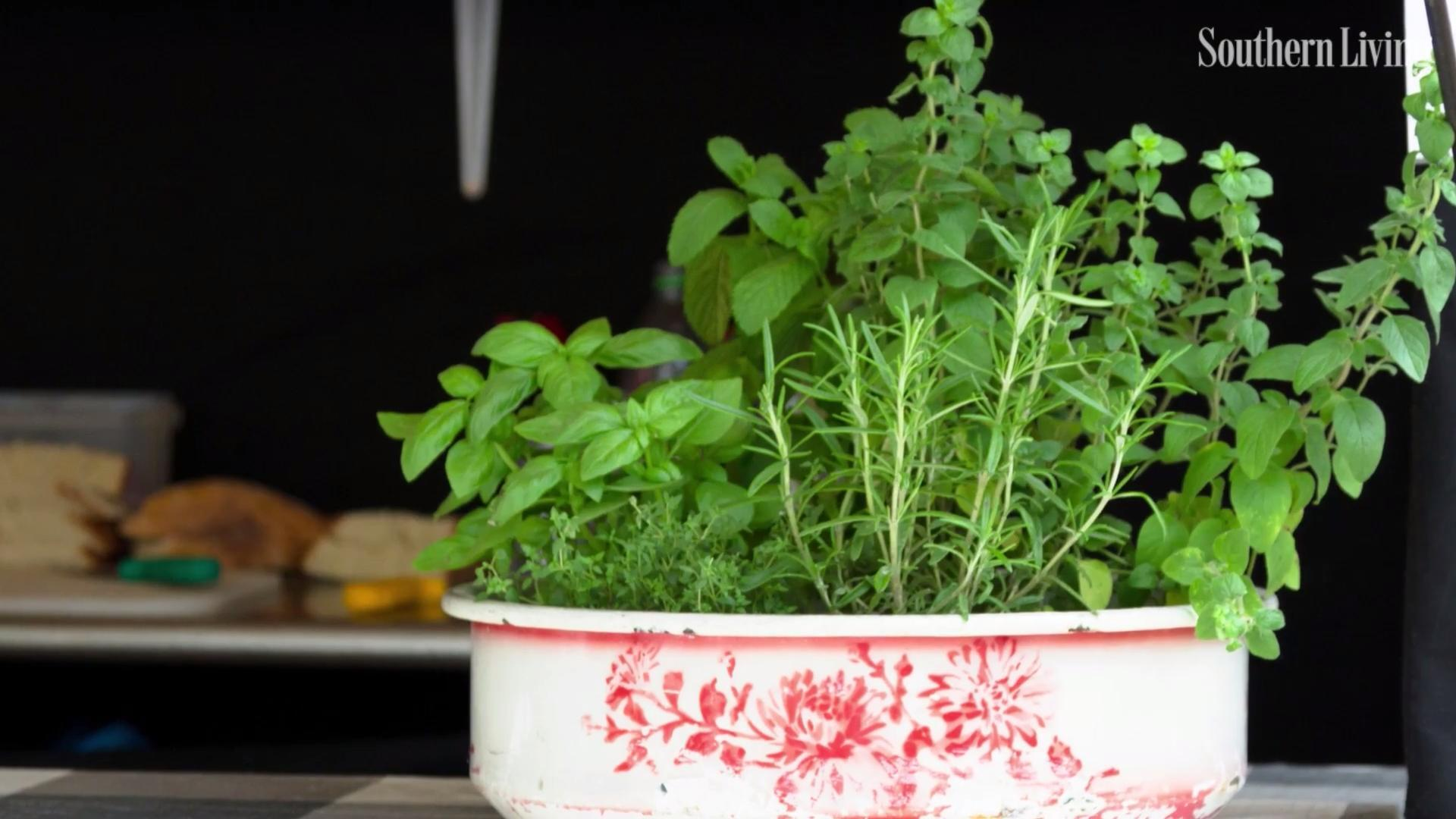 16 Herbs You Can Grow Indoors All Year Long