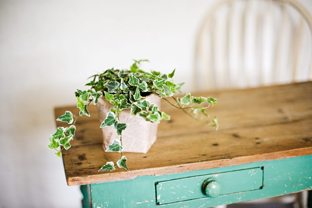 Top Tips For Growing Ivy Indoors