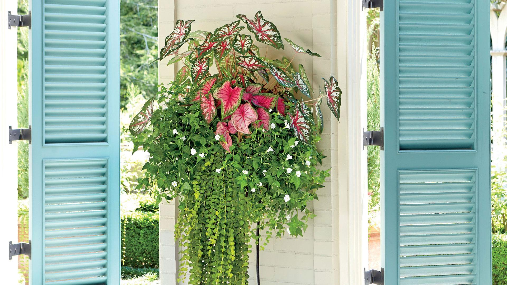 Our 10 Best Container Gardens