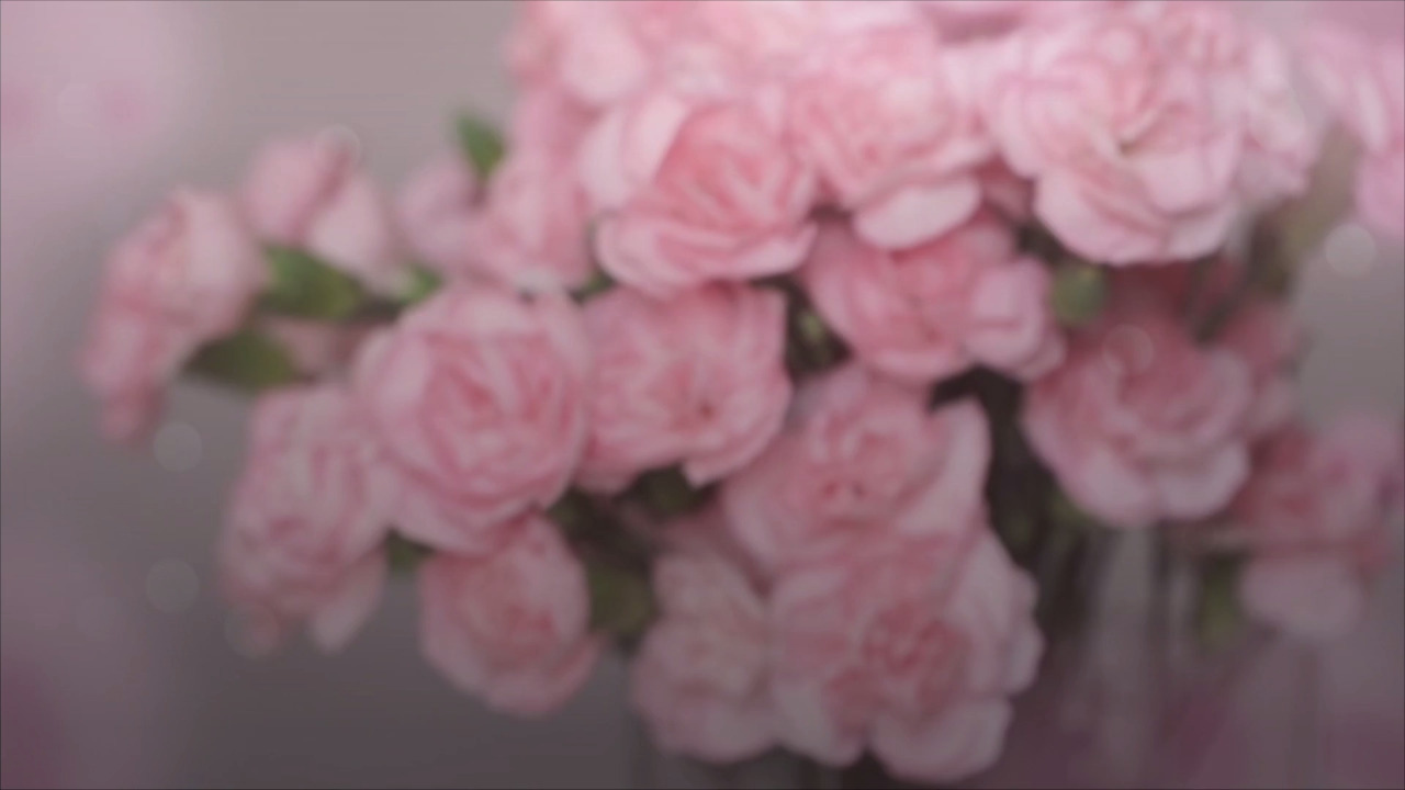In Defense of Carnations: One Editor's Love for the Afterthought Blooms