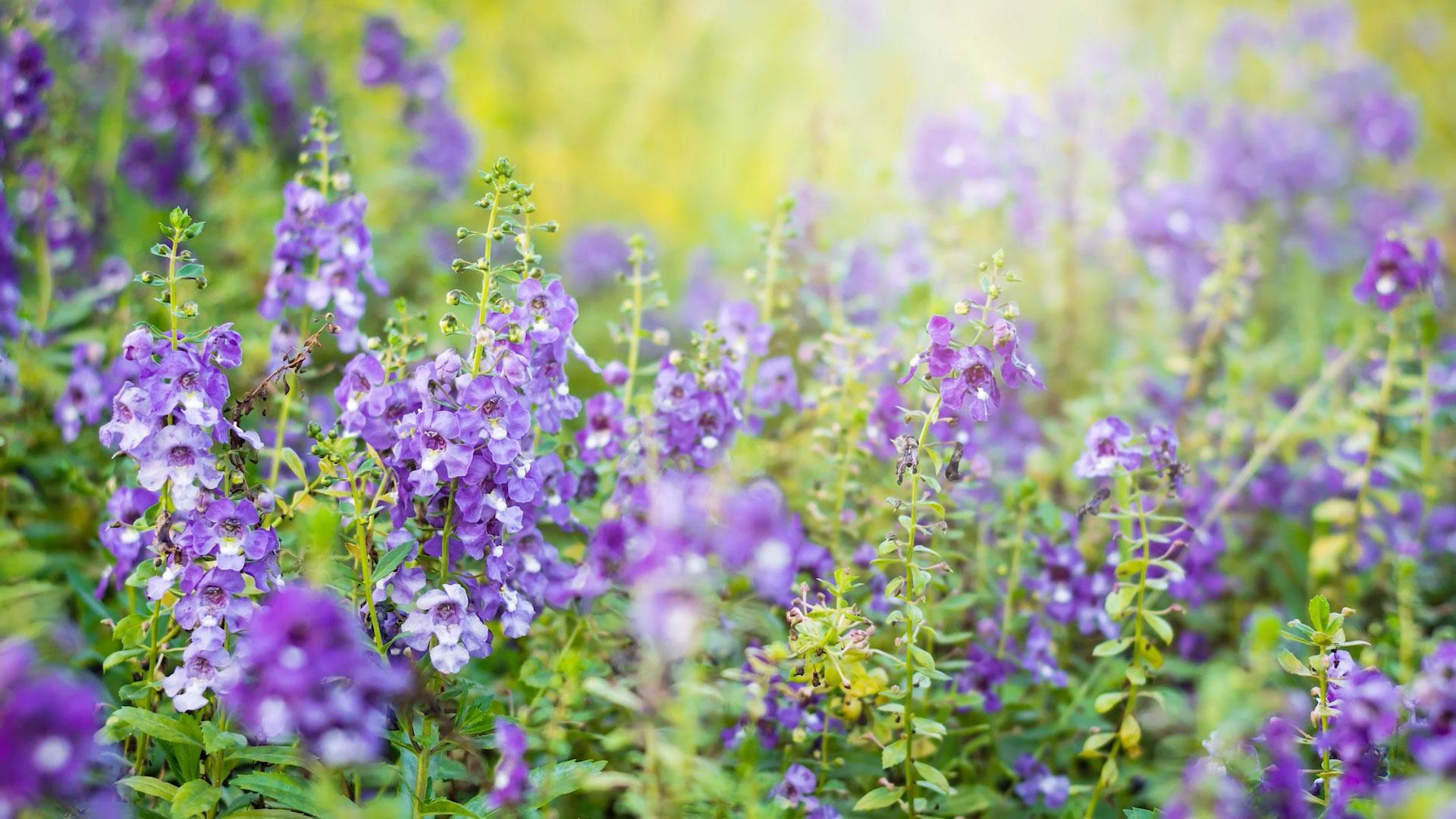 5 Great Flowers For Brown Thumbs