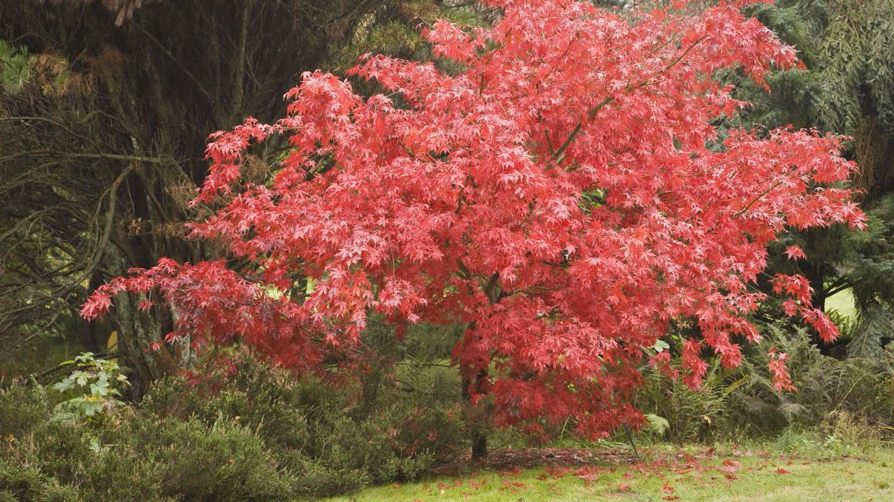 5 Great Trees For Small Spaces