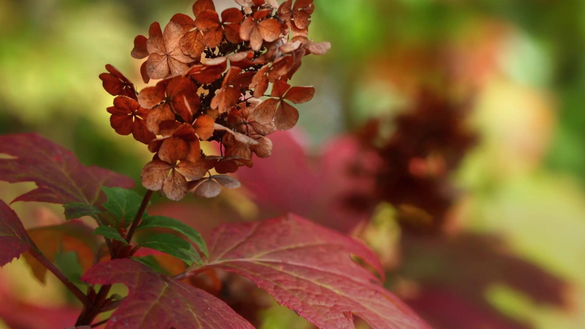 Make Your Garden Sing with Color Come Fall