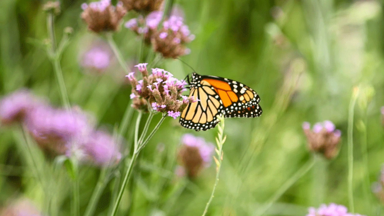 Help Pollinators With Your Garden