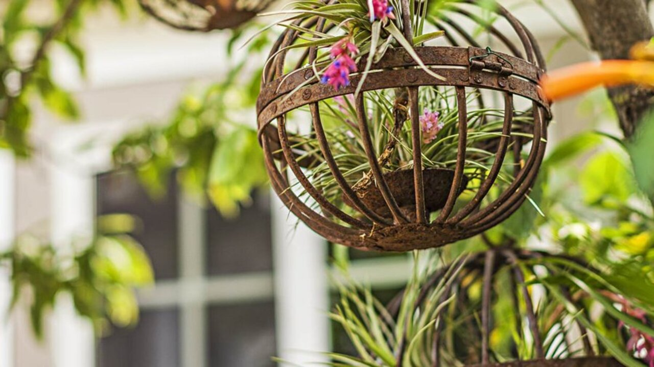 5 More Gorgeous Ways to Display Your Air Plants