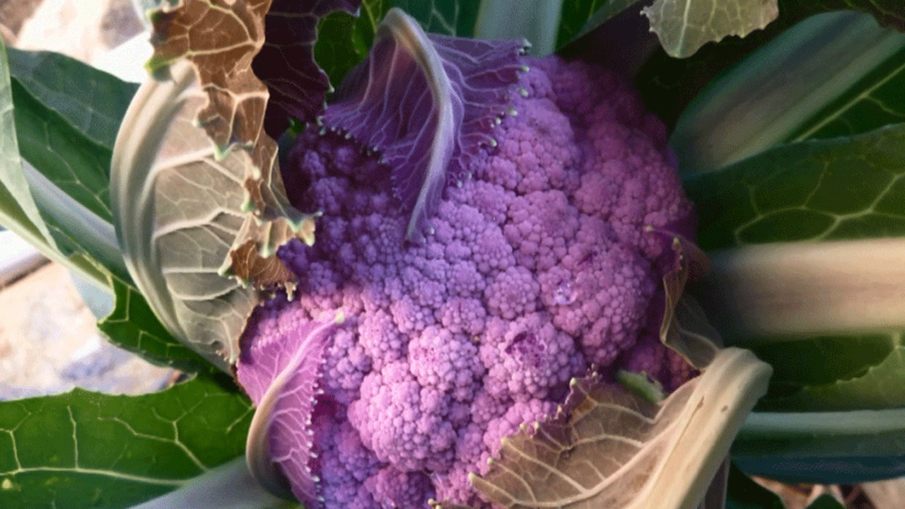 Video: Growing Cool-Season Vegetables