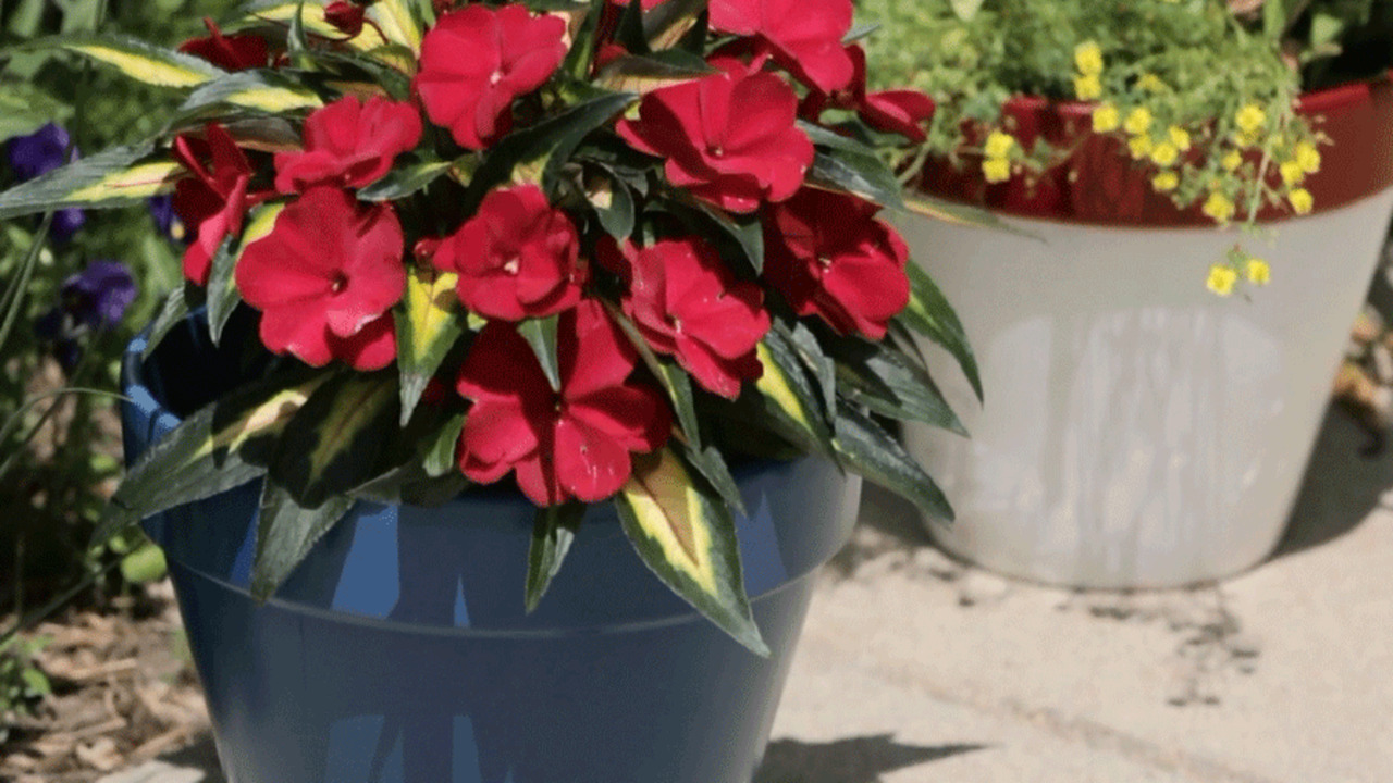 How to Paint Plant Pots