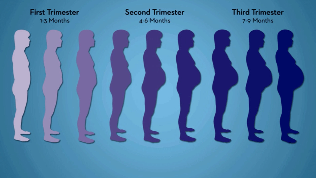 5 Simple Pregnancy Exercises For Every Trimester Parents