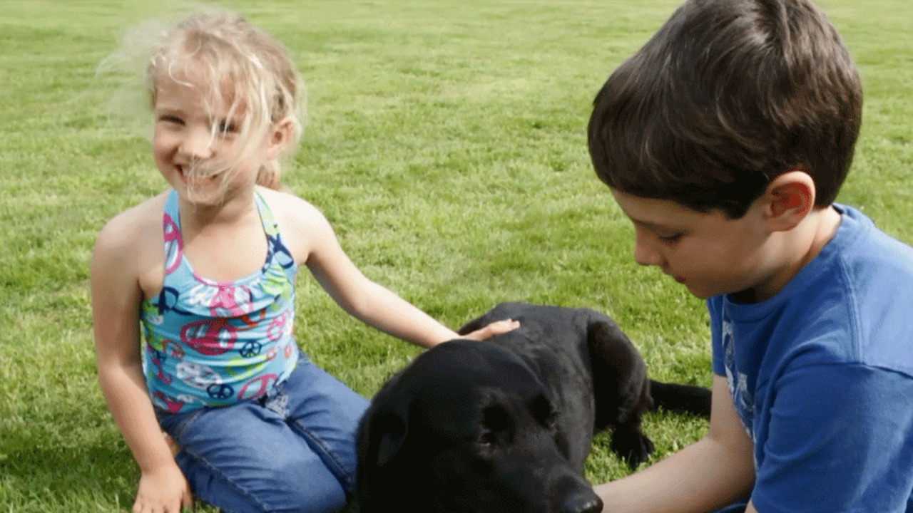 Manners & Responsibility: Raising Responsible Pet Owners