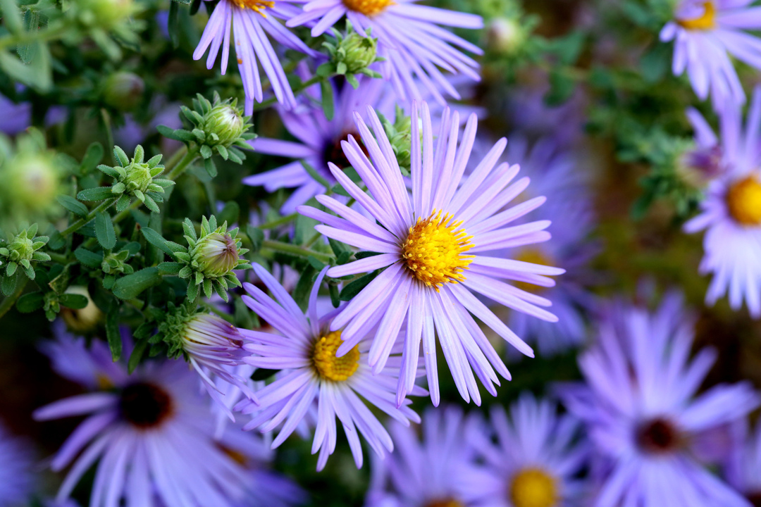 The 10 Best Plants for Fall Container Gardens