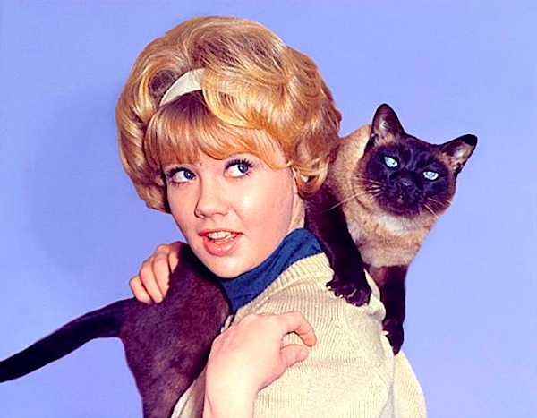 A still of Hayley Mills and her cat friend from the movie 'That Darn Cat.'