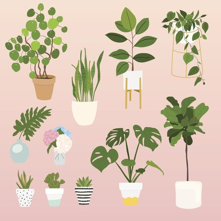 12 Of The Best Plants For Apartments, The Best Indoor Plants ... Best House Plants By Name on plant identification by name, palms by name, birds by name, iris by name, house plant names a-z, peonies by name, tropical plants by name, dahlias by name, succulent plants by name, lilies by name, house plant identification, tools by name,