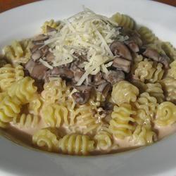 Portobello Mushroom Sauce sanzoe