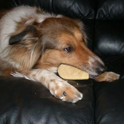 Sparky's Doggie Treats Sarah Keller
