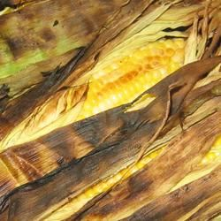 Grilled Corn on the Cob Trish Beier