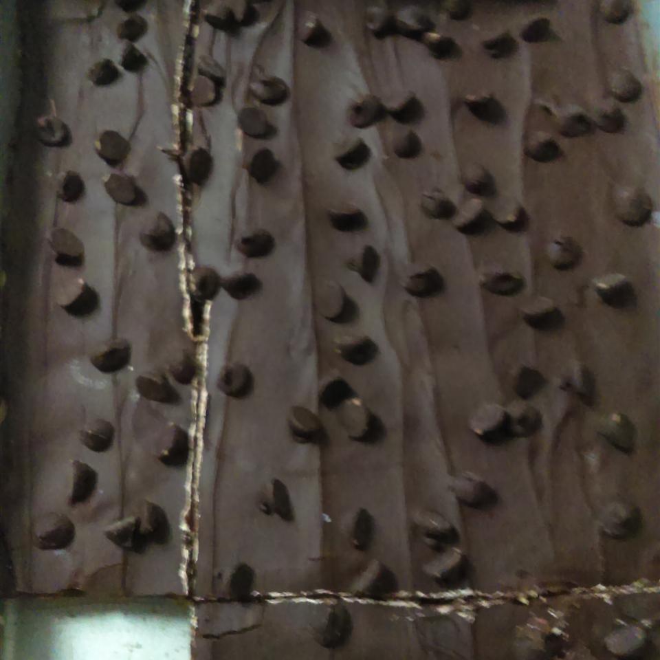 Chocolate Peanut Butter Bars II Amanda Mull