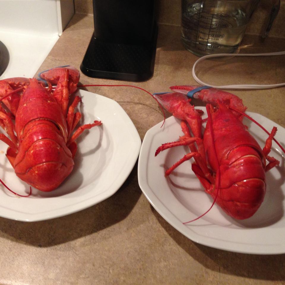 Boiled Lobster Kat Lacroix