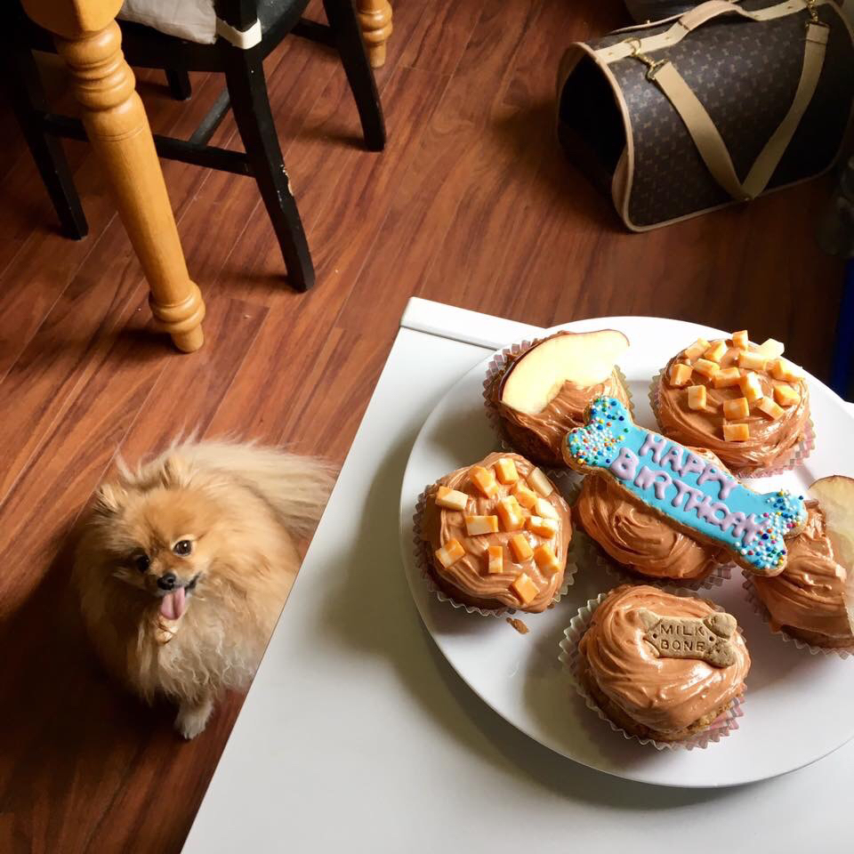 Doggie Birthday Cake littlemody