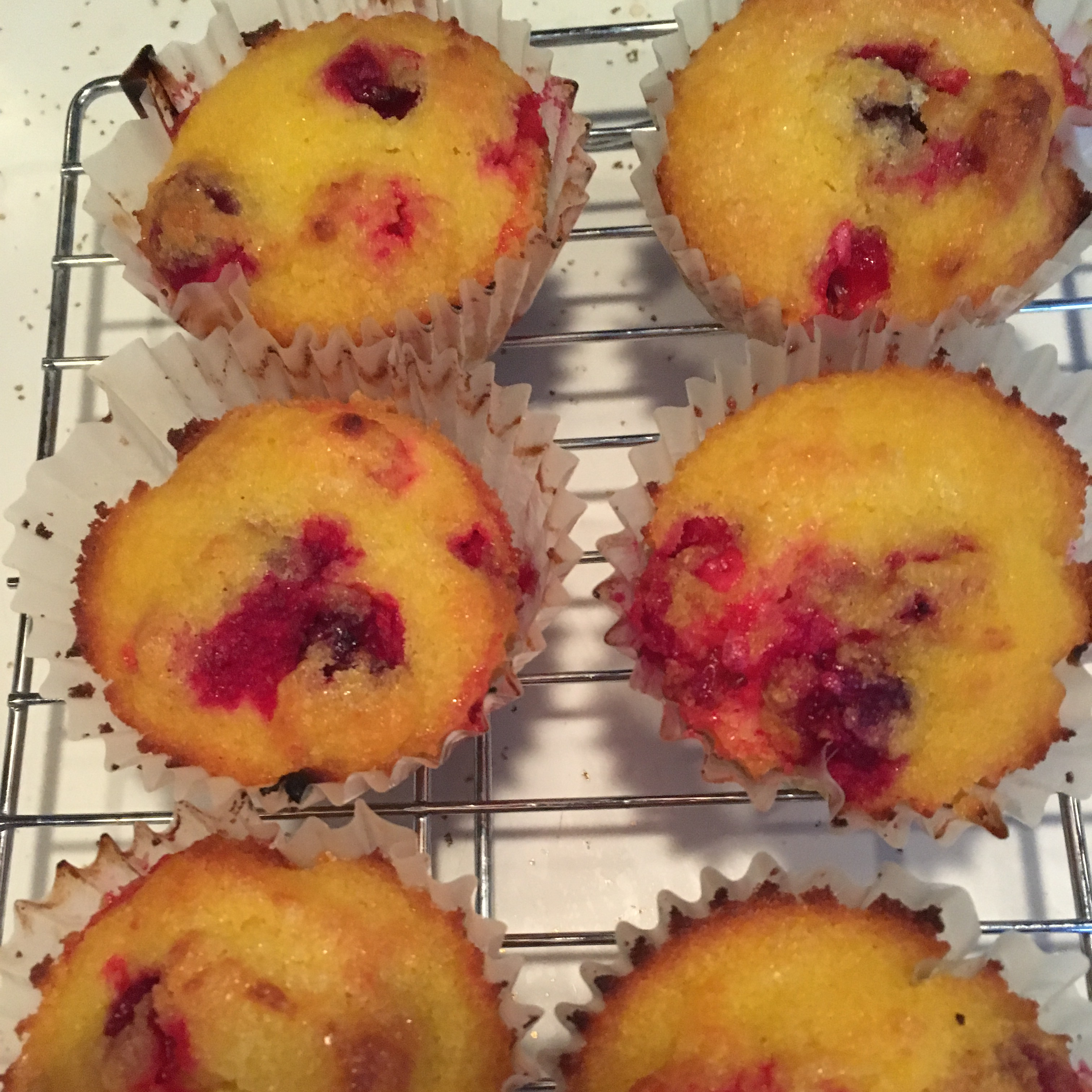 Gluten-Free Blueberry Muffins made with Coconut Flour Laura Tripp