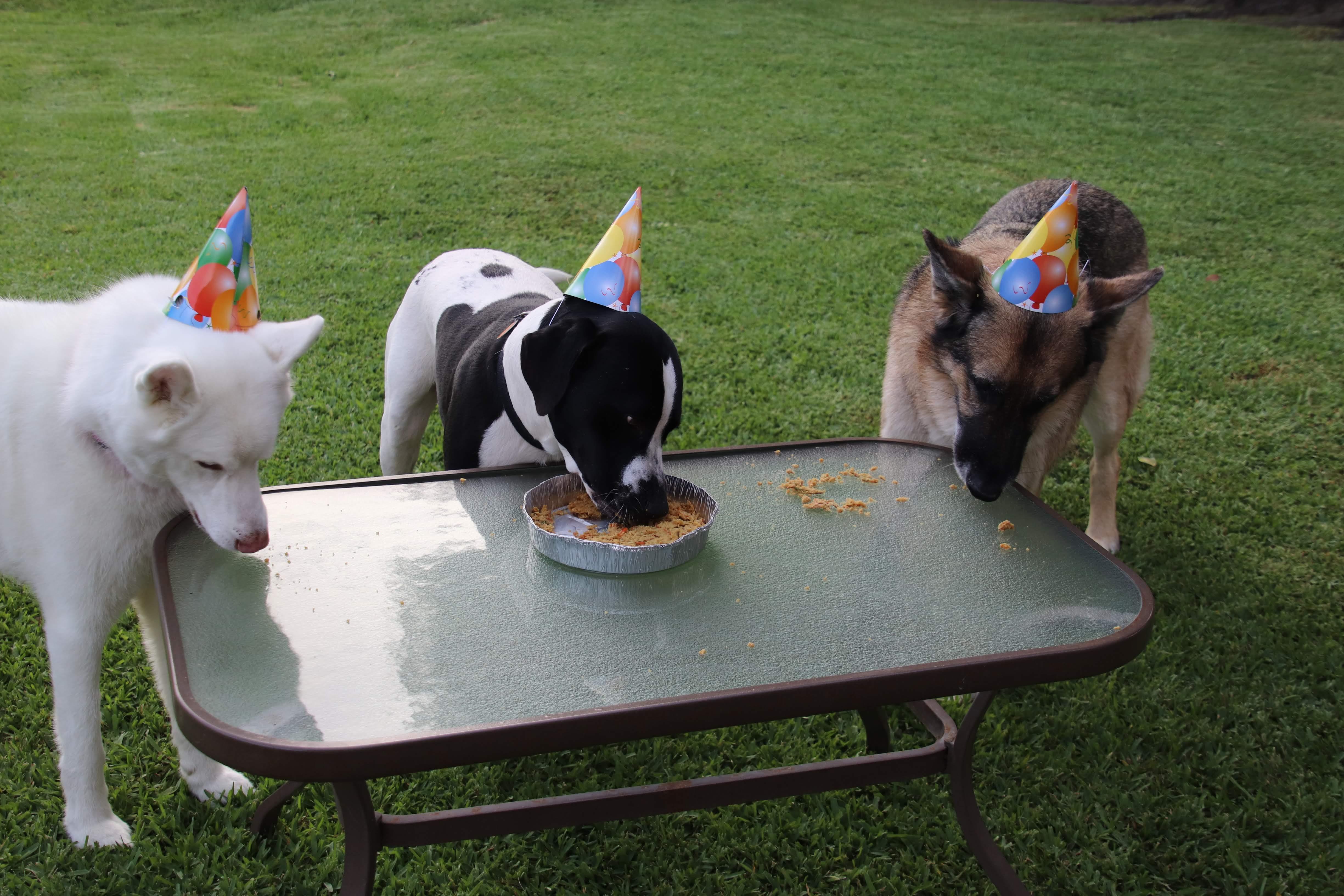 Doggie Birthday Cake tiggertiffin87