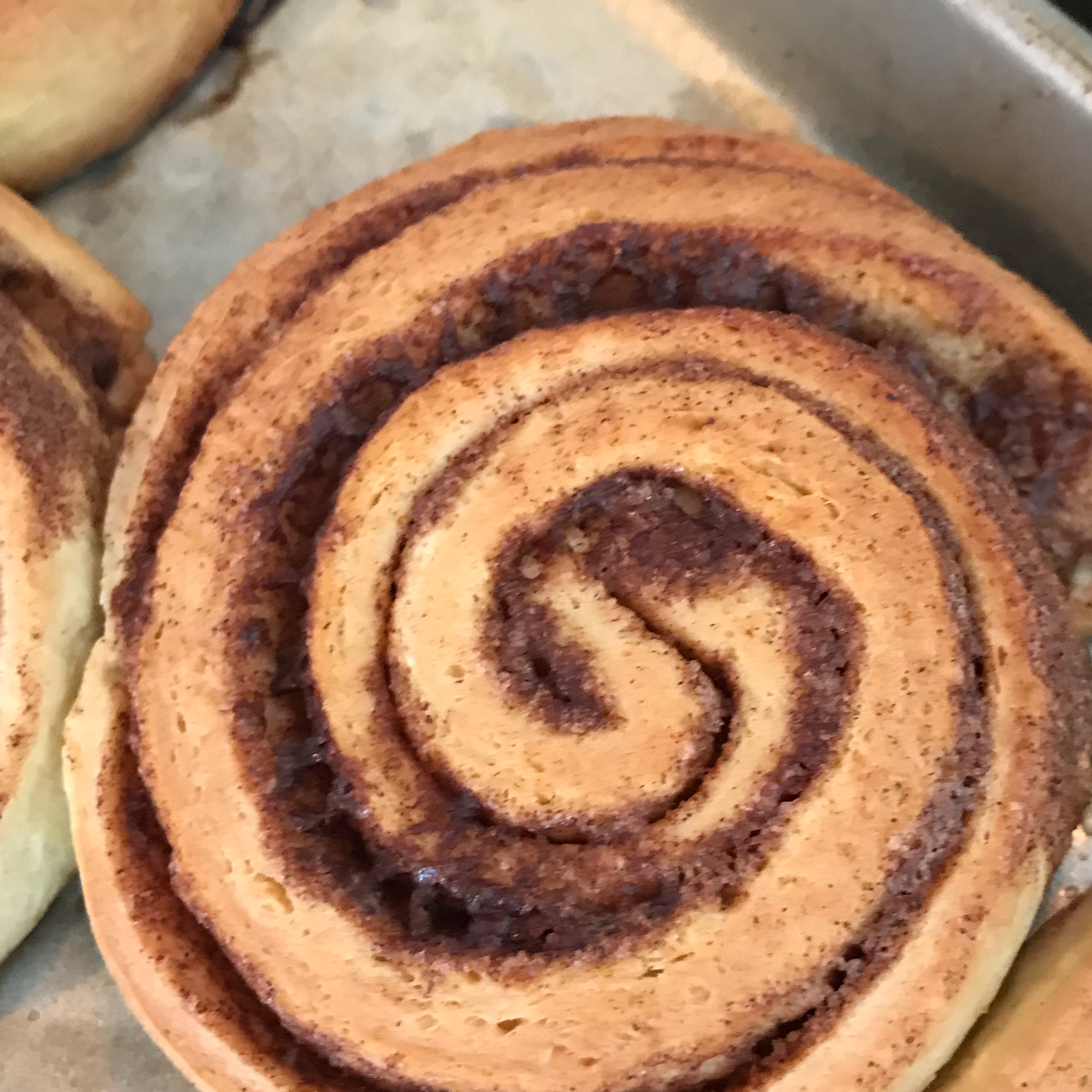Danish Cinnamon Snails