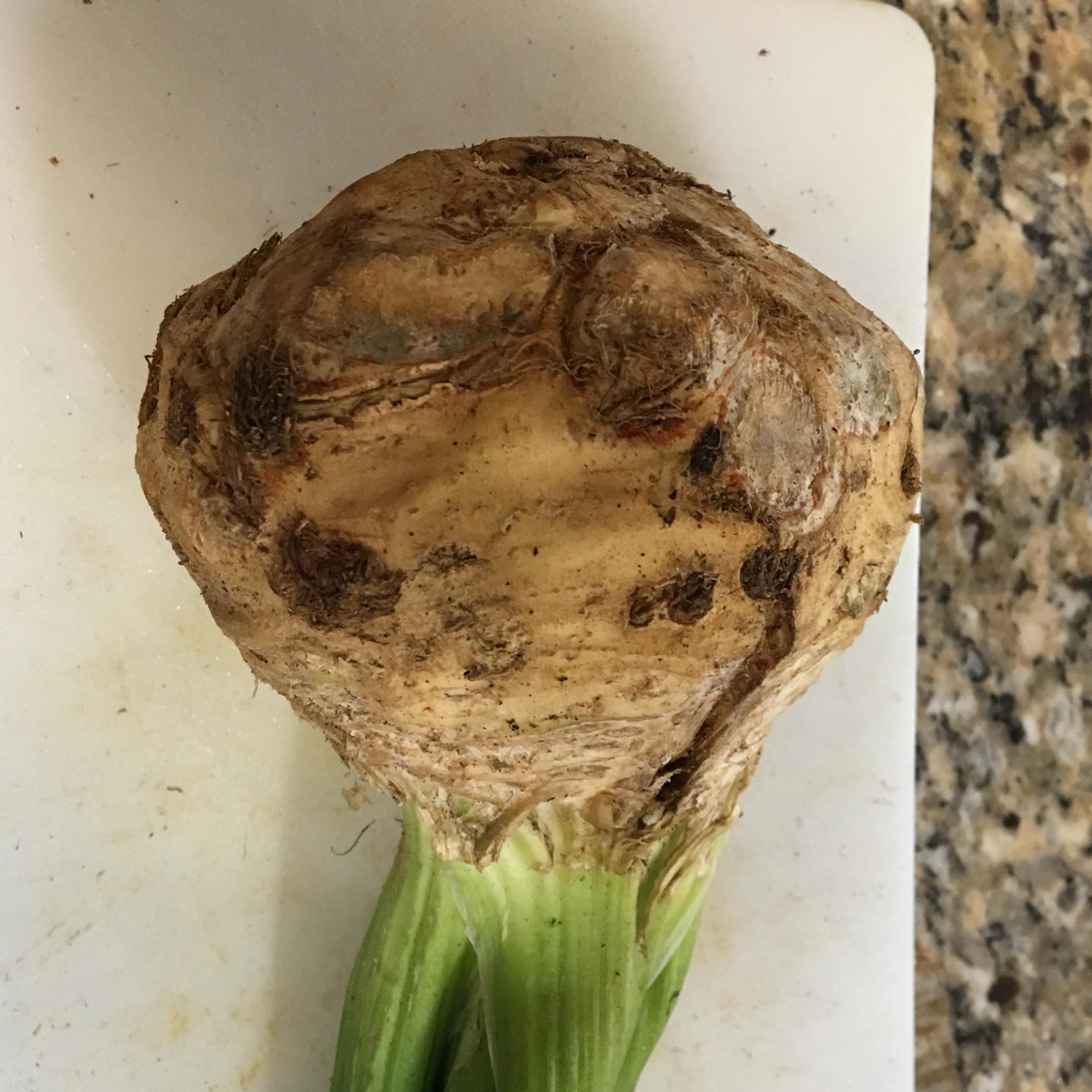 Celery Root Puree Linda Hart