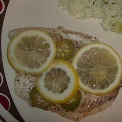 Fish in Foil Zenthia