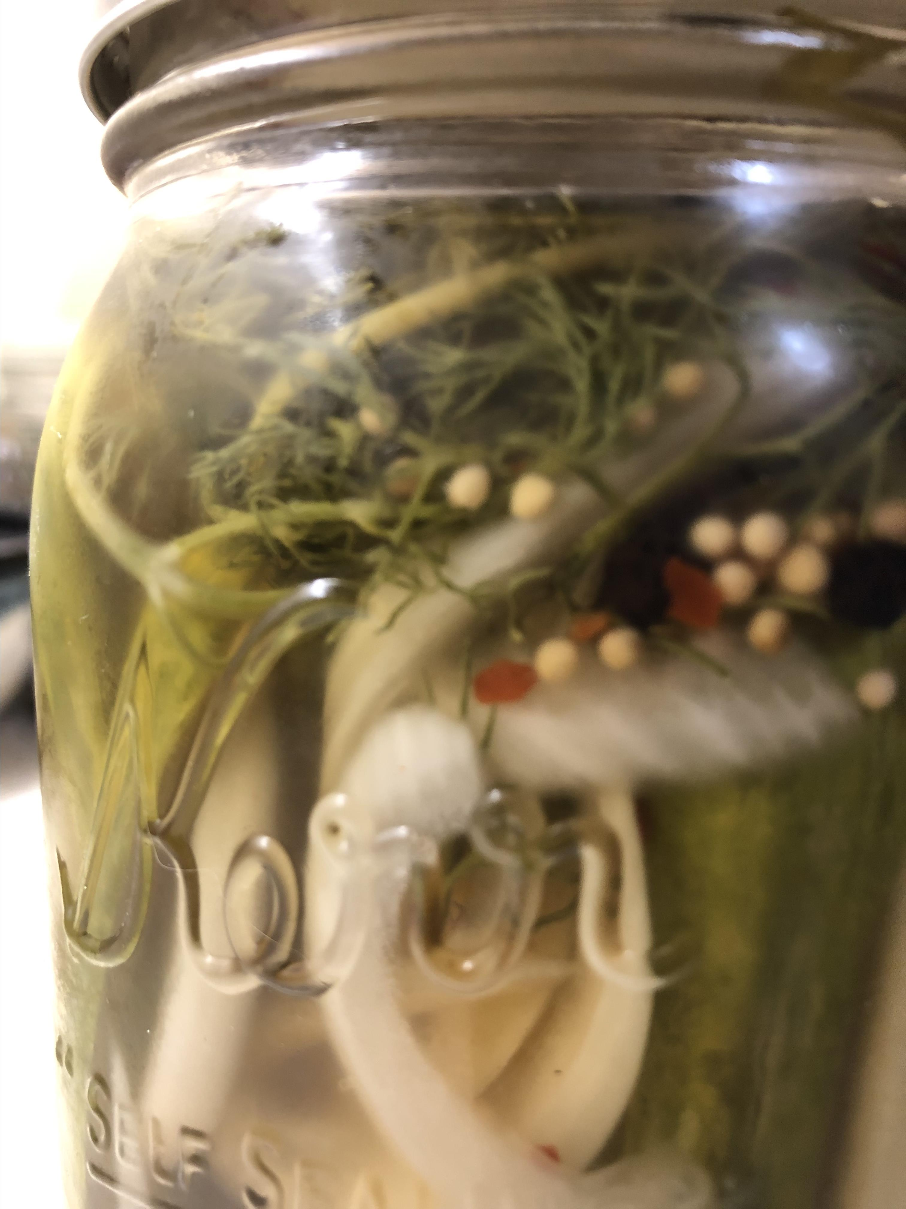 Nothin' Sweet About These Spicy Refrigerator Pickles canesmojo
