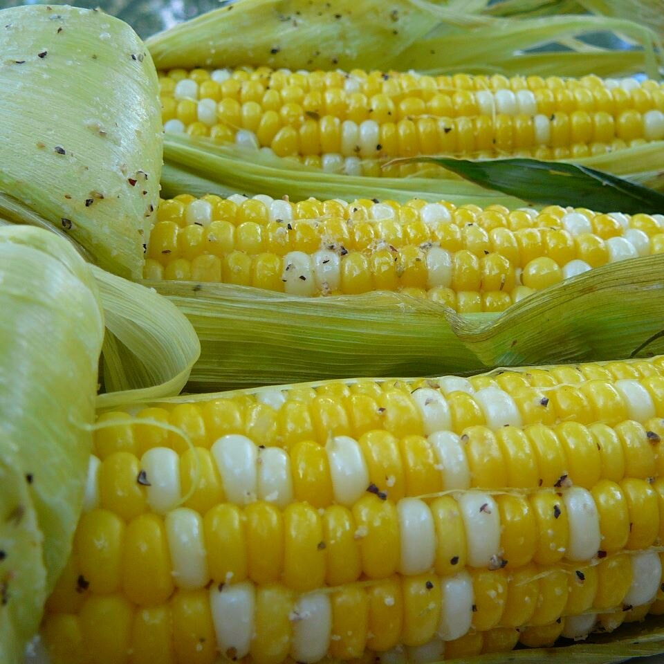 Grilled Corn On The Cob Allrecipes,Types Of Hamsters