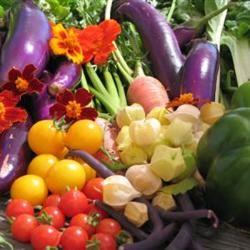 Herb Grilled Vegetables Campbell's Kitchen