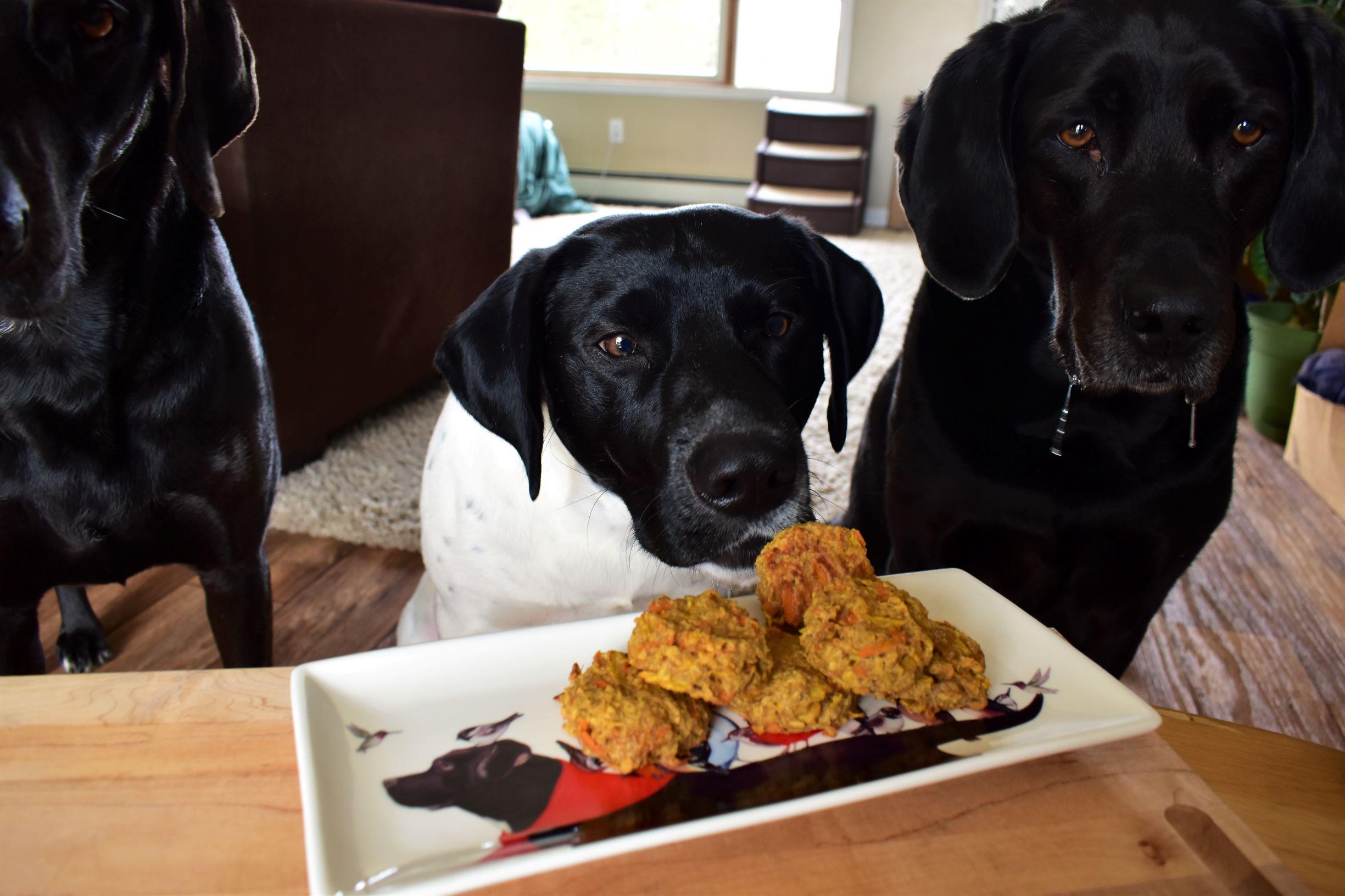 Homemade Dog Treats Kim