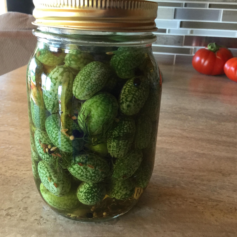 Cucamelon Pickles Debi