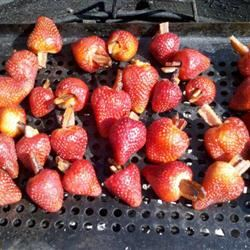 Grilled Bacon-Stuffed Strawberries