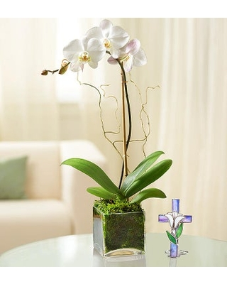 Elegant Orchid for Sympathy orchid for sympathy with Cross - 1-800-flowers