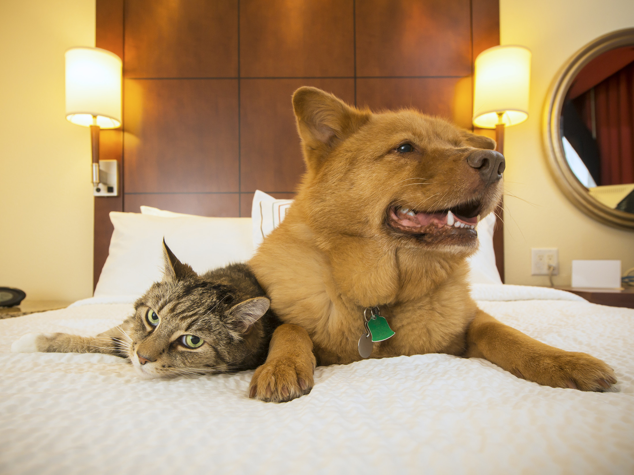 Pets on Hotel Room Bed